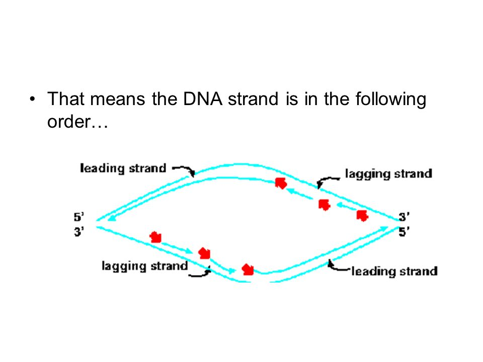 That means the DNA strand is in the following order…