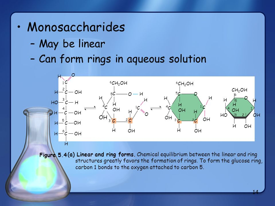 Monosaccharides May be linear Can form rings in aqueous solution 4C