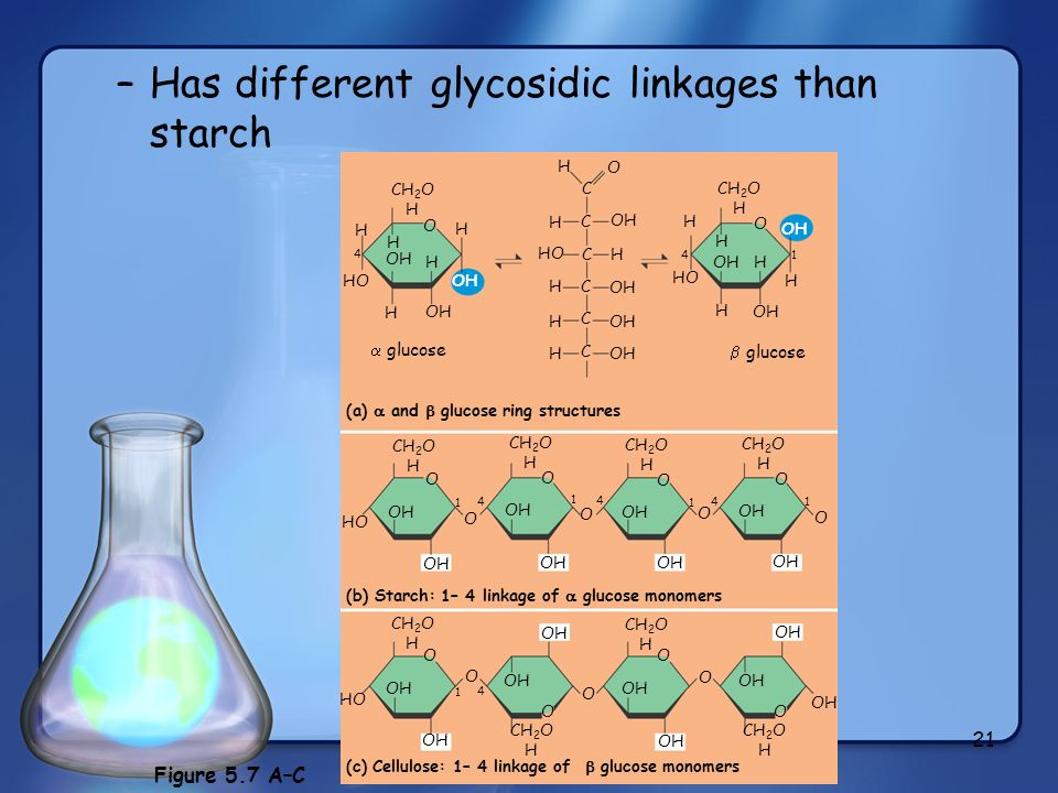 Has different glycosidic linkages than starch