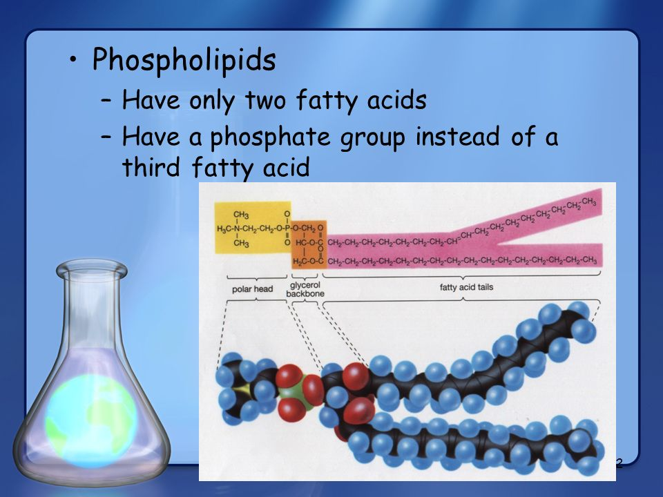 Phospholipids Have only two fatty acids