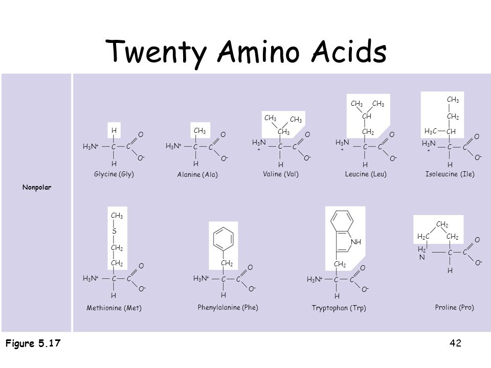 Twenty Amino Acids 20 different amino acids make up proteins