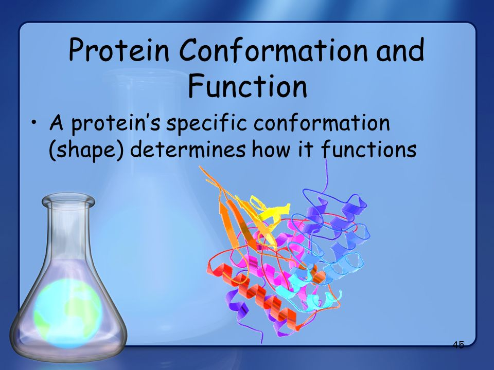 Protein Conformation and Function