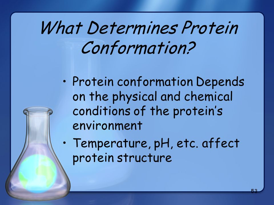 What Determines Protein Conformation