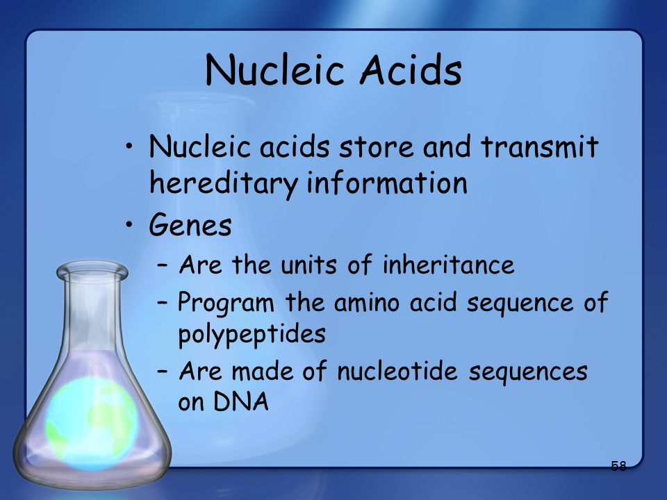 Nucleic Acids Nucleic acids store and transmit hereditary information