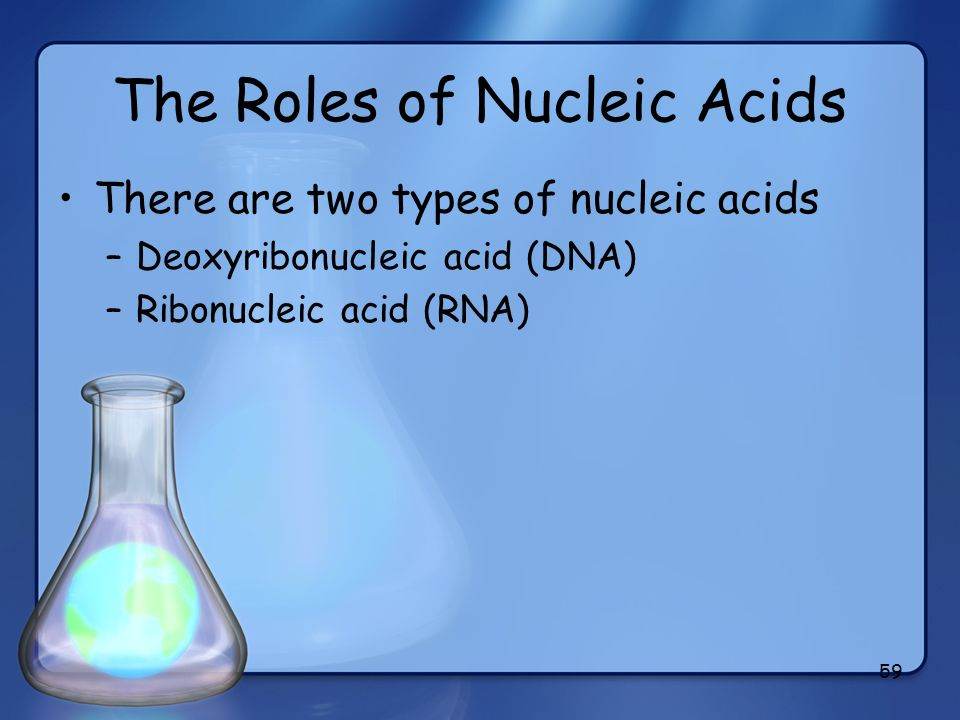 The Roles of Nucleic Acids