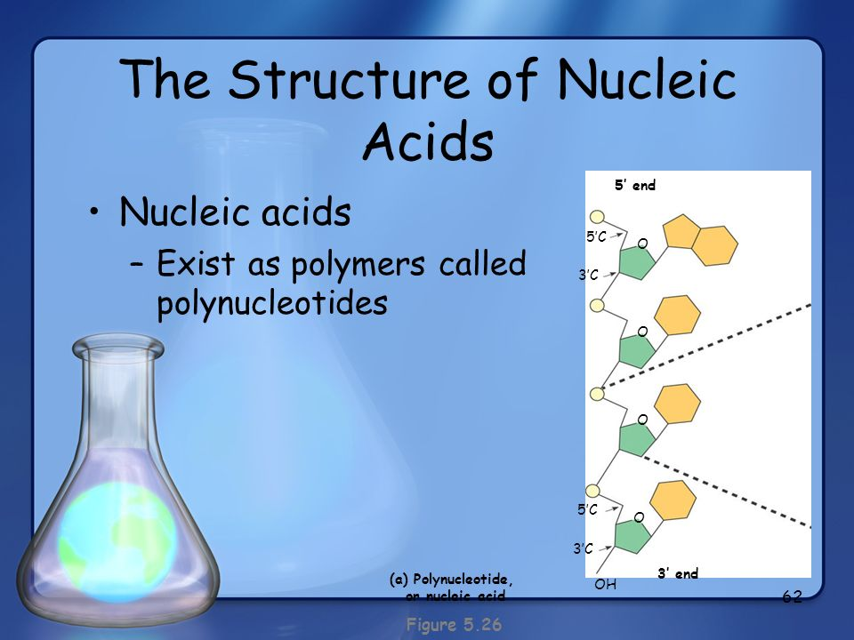 The Structure of Nucleic Acids