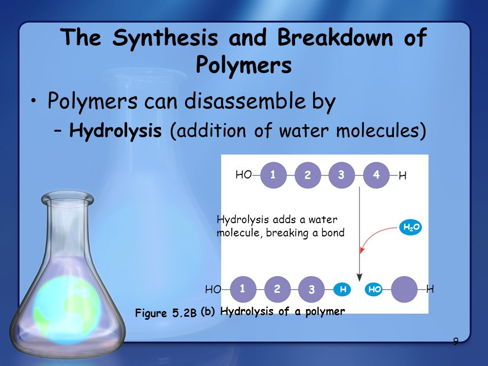 The Synthesis and Breakdown of Polymers