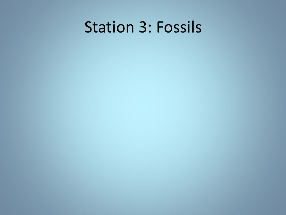 Station 3: Fossils
