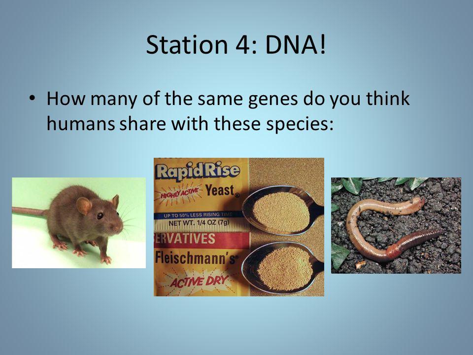 Station 4: DNA.