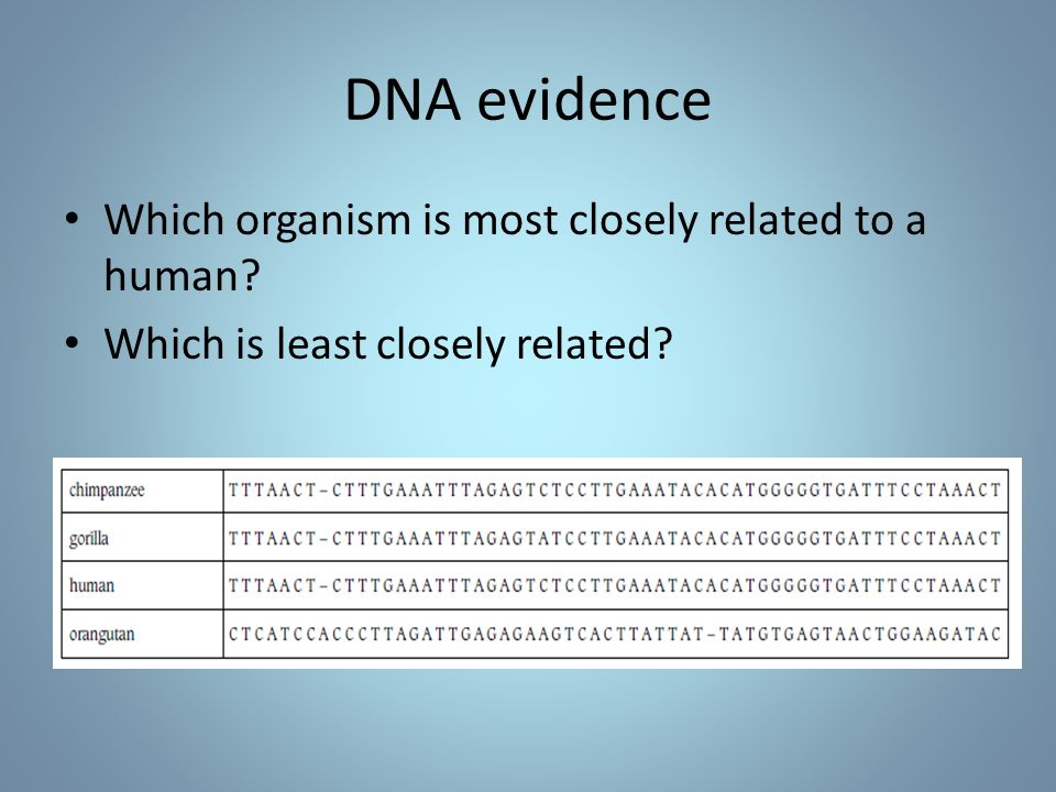 DNA evidence Which organism is most closely related to a human