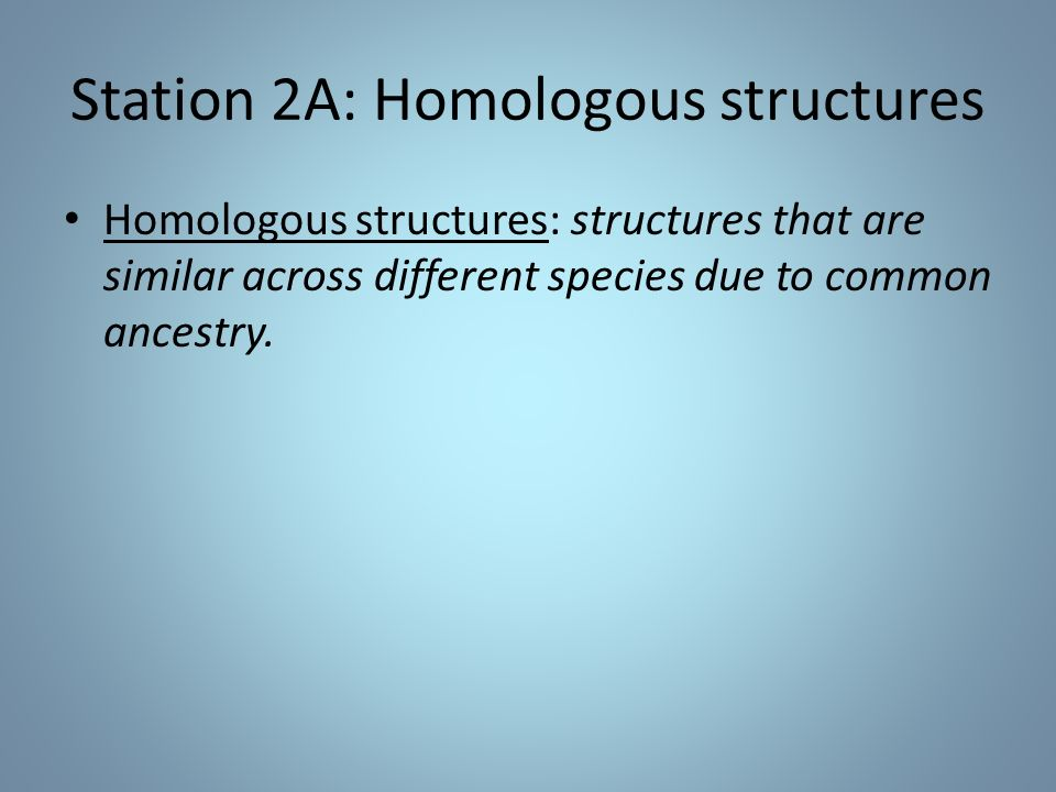 Station 2A: Homologous structures