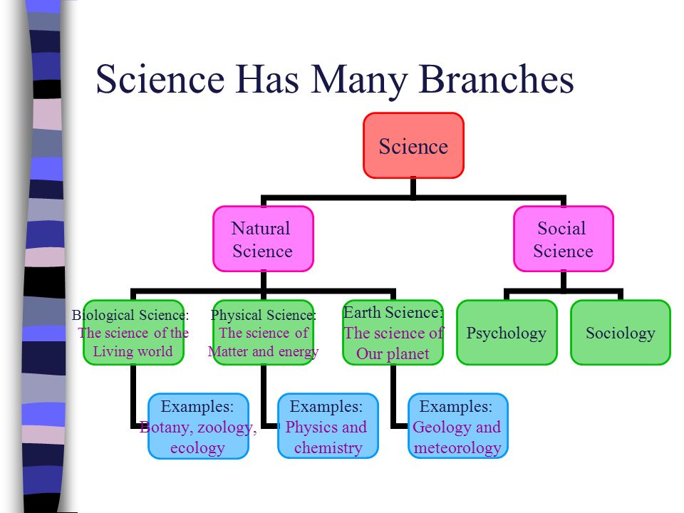 Is Social Science A Branch Of Natural Science