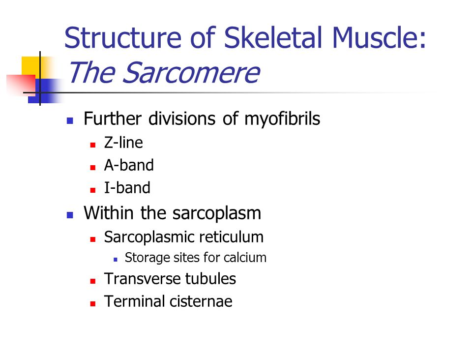 Structure of Skeletal Muscle: The Sarcomere