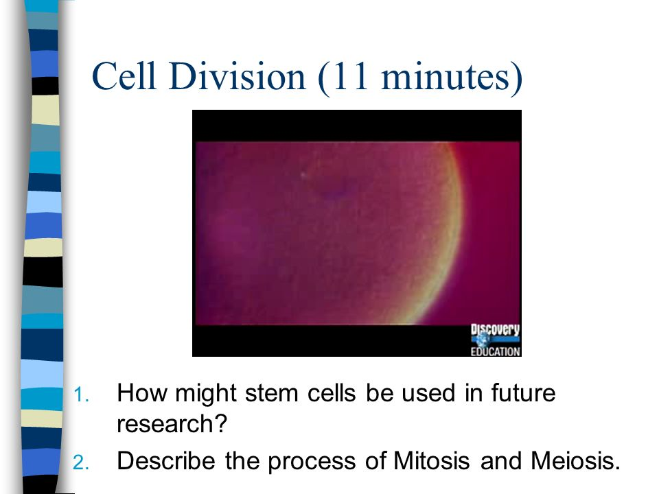 Cell Division (11 minutes)