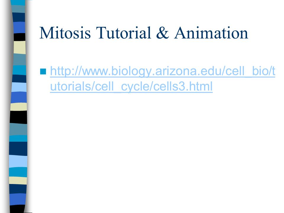 Mitosis Tutorial & Animation