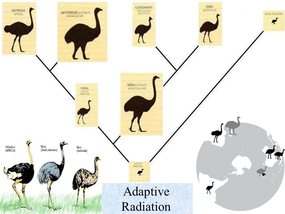 unit 7 evolution amp classification ppt video online download