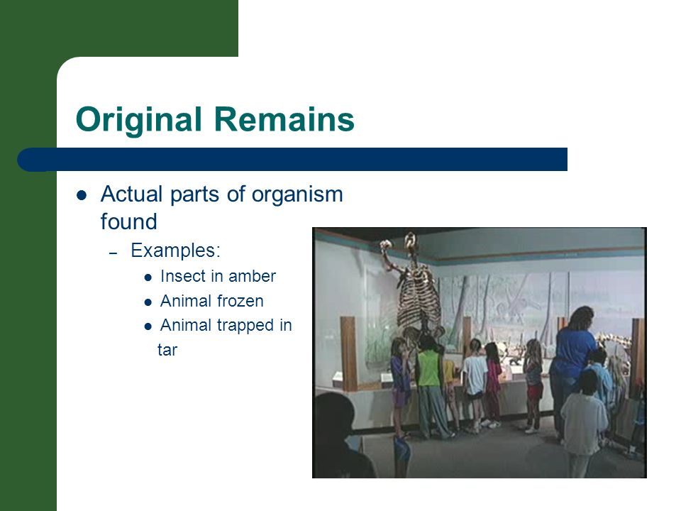 Original Remains Actual parts of organism found Examples: