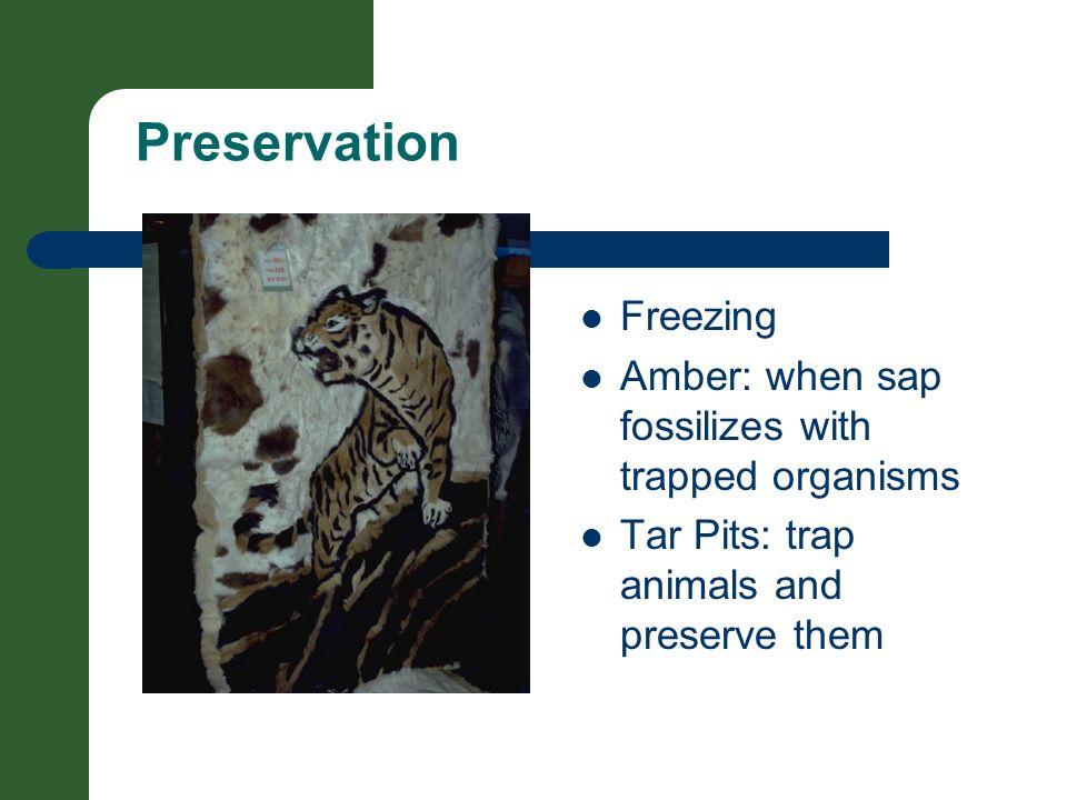 Preservation Freezing