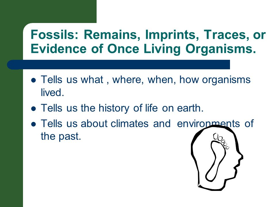 Fossils: Remains, Imprints, Traces, or Evidence of Once Living Organisms.