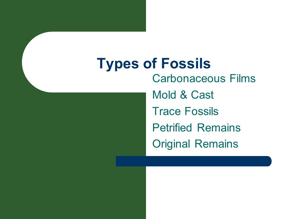 Types of Fossils Carbonaceous Films Mold & Cast Trace Fossils
