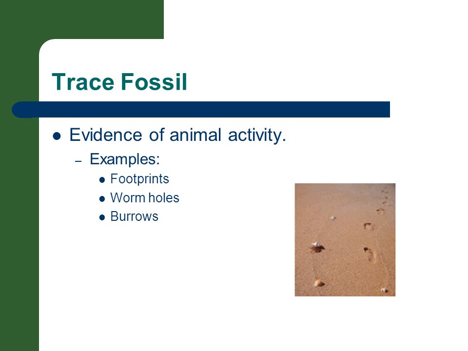 Trace Fossil Evidence of animal activity. Examples: Footprints