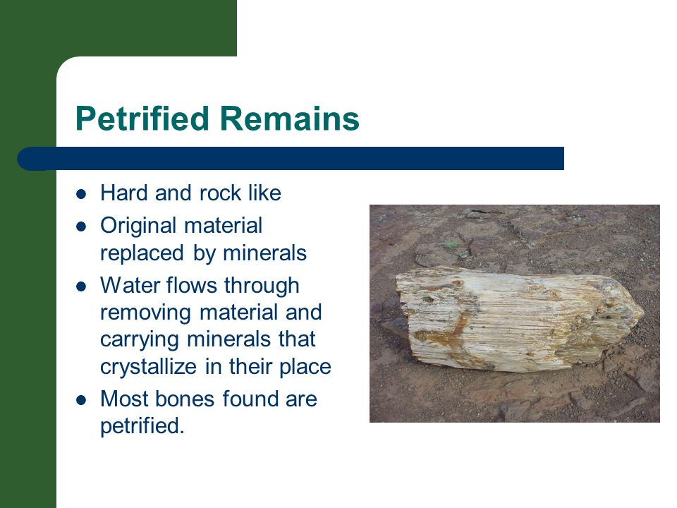Petrified Remains Hard and rock like