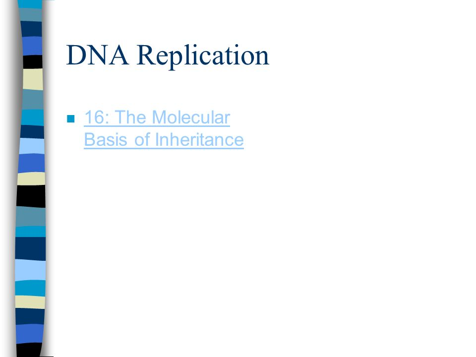 DNA Replication 16: The Molecular Basis of Inheritance