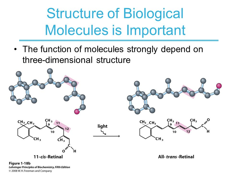 importance of stereoisomers in a biological Principles of cell biology (biol2060)  atoms or groups are bonded to produce stereoisomers  the importance of self-assembly many biological compound,.