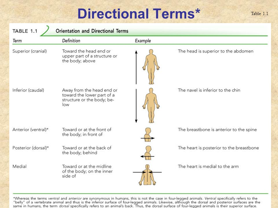 Directional Terms* Table 1.1