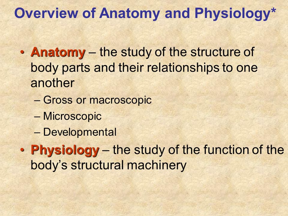 Overview of Anatomy and Physiology*