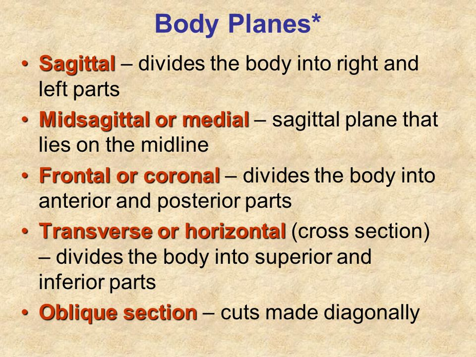 Body Planes* Sagittal – divides the body into right and left parts