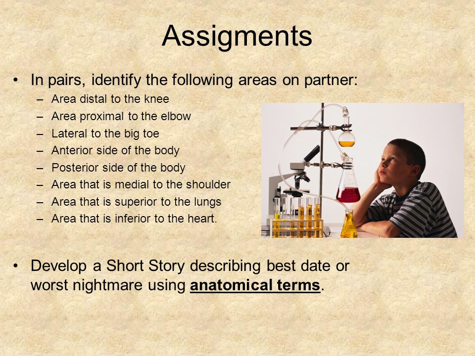 Assigments In pairs, identify the following areas on partner: