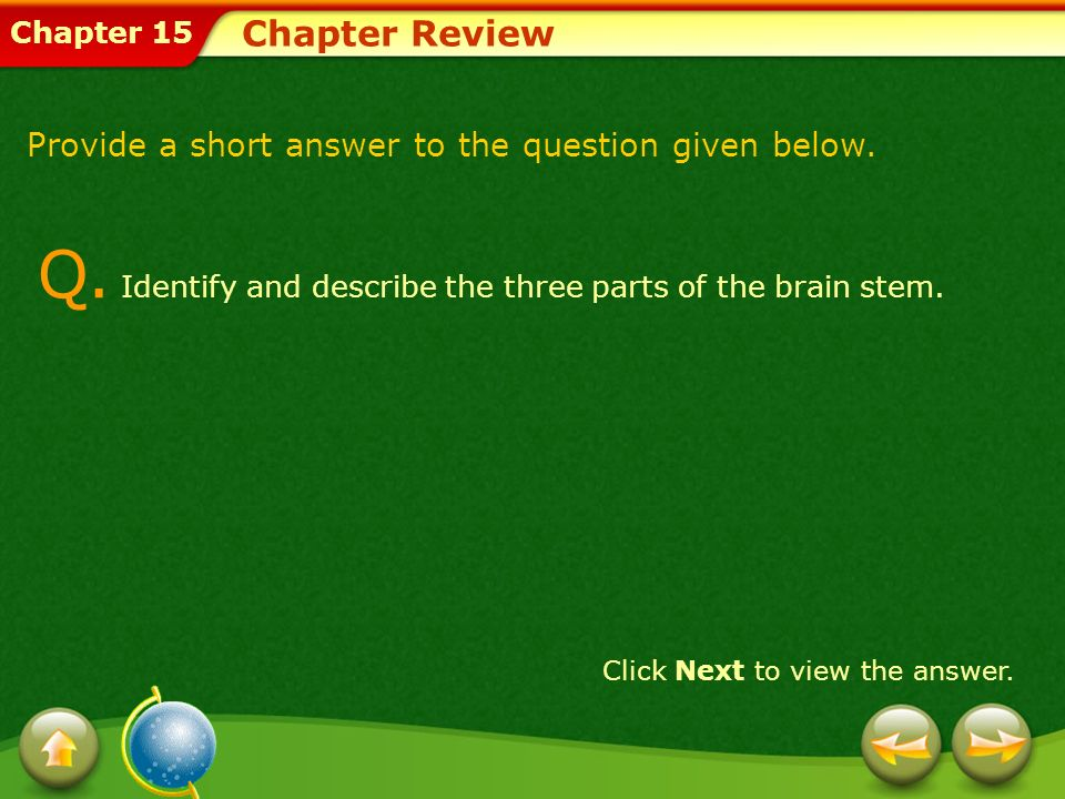 Q. Identify and describe the three parts of the brain stem.
