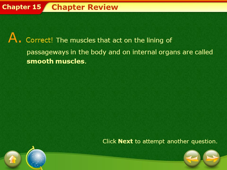 Chapter Review A. Correct! The muscles that act on the lining of passageways in the body and on internal organs are called smooth muscles.