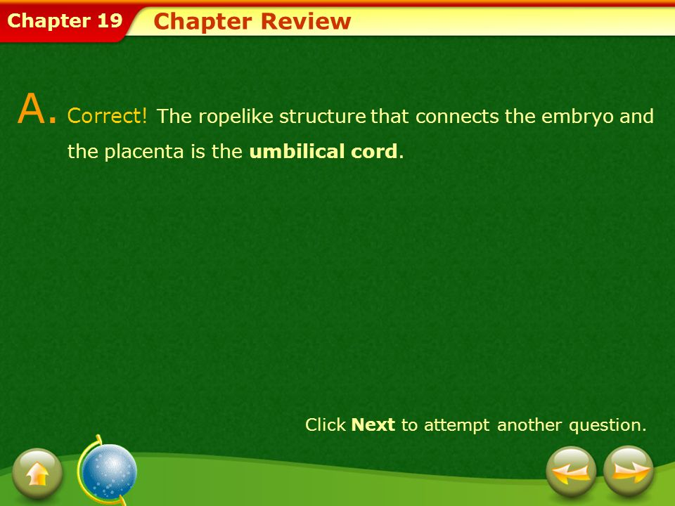 Chapter ReviewA. Correct! The ropelike structure that connects the embryo and the placenta is the umbilical cord.