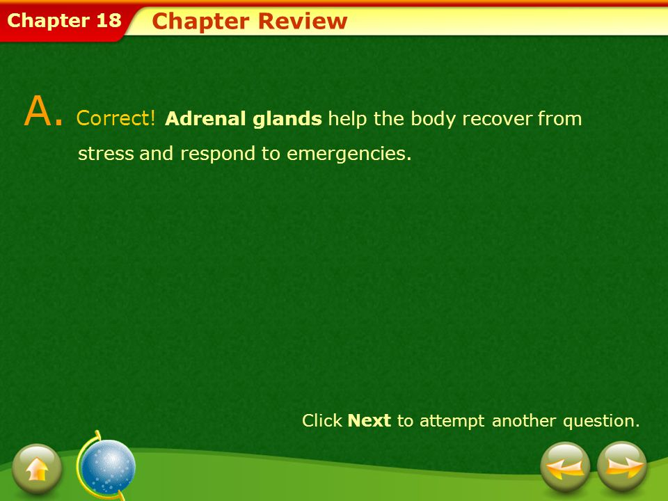 Chapter Review A. Correct! Adrenal glands help the body recover from stress and respond to emergencies.