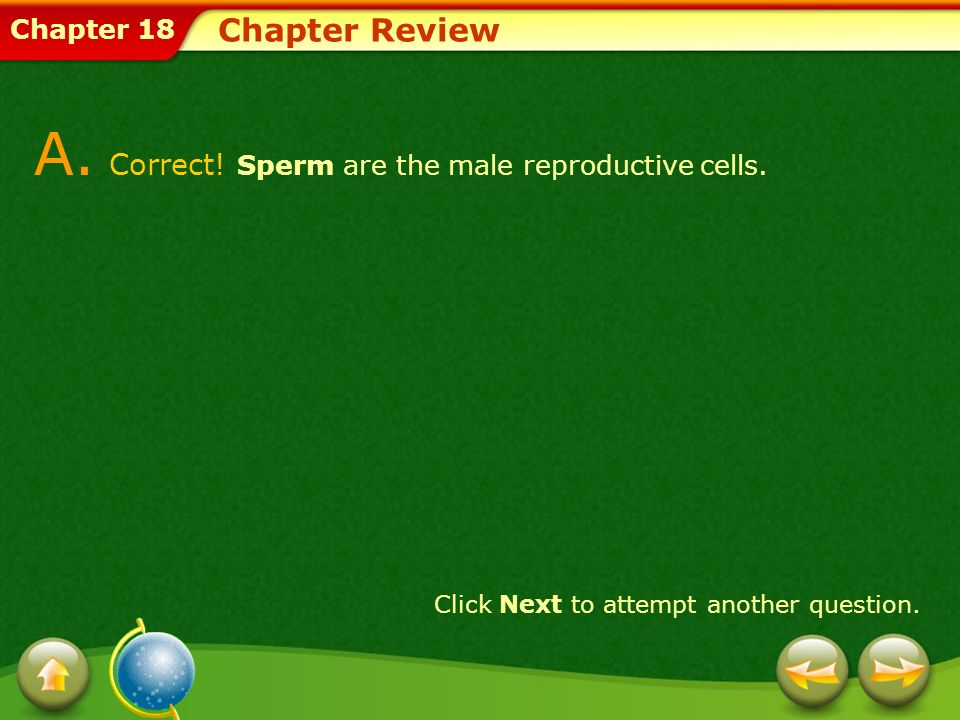 A. Correct! Sperm are the male reproductive cells.