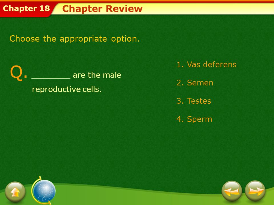 Q. ________ are the male reproductive cells.