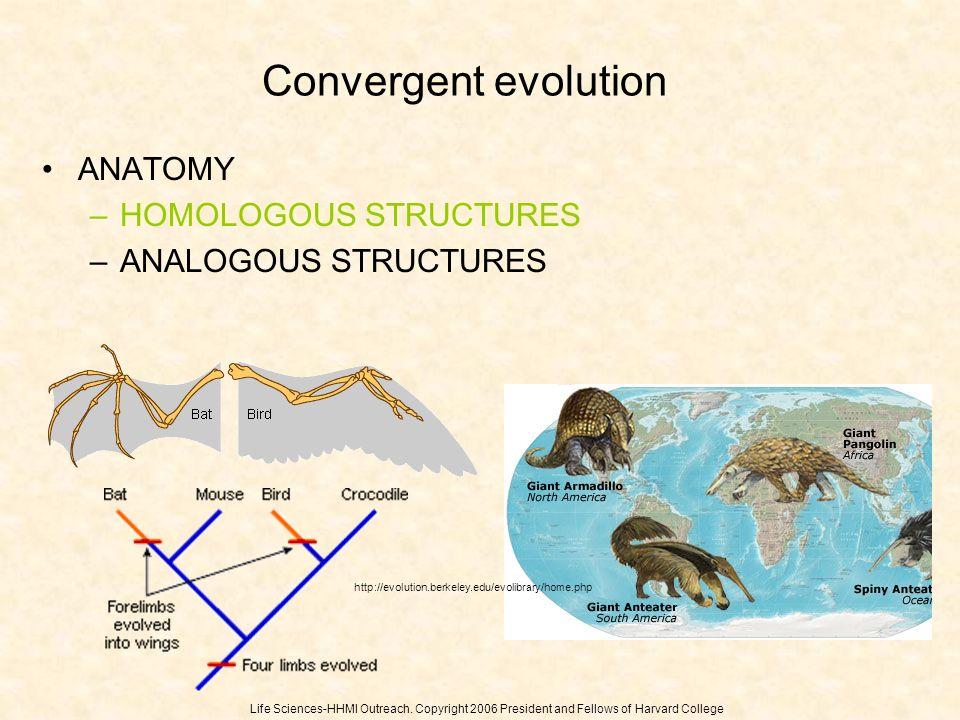 Convergent evolution ANATOMY HOMOLOGOUS STRUCTURES