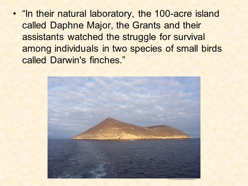 In their natural laboratory, the 100-acre island called Daphne Major, the Grants and their assistants watched the struggle for survival among individuals in two species of small birds called Darwin s finches.