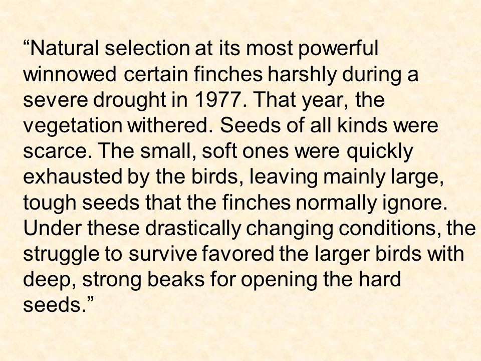 Natural selection at its most powerful winnowed certain finches harshly during a severe drought in 1977.