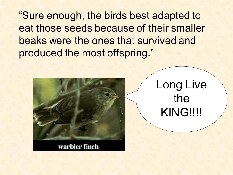 Sure enough, the birds best adapted to eat those seeds because of their smaller beaks were the ones that survived and produced the most offspring.