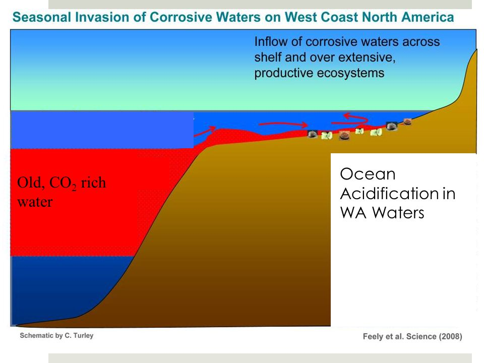 Ocean Acidification in WA Waters Old, CO2 rich water