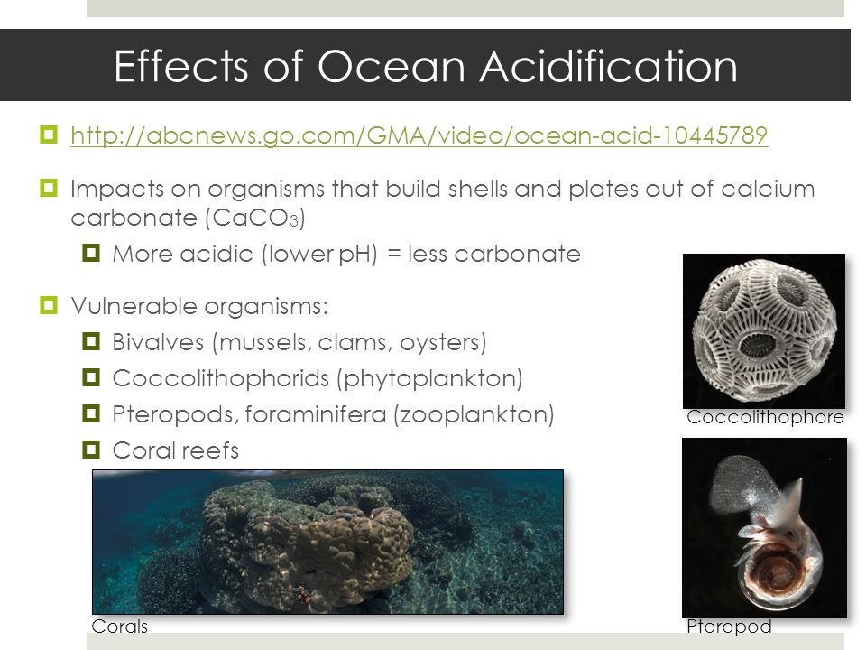 Effects of Ocean and Coastal Acidification on Ecosystems