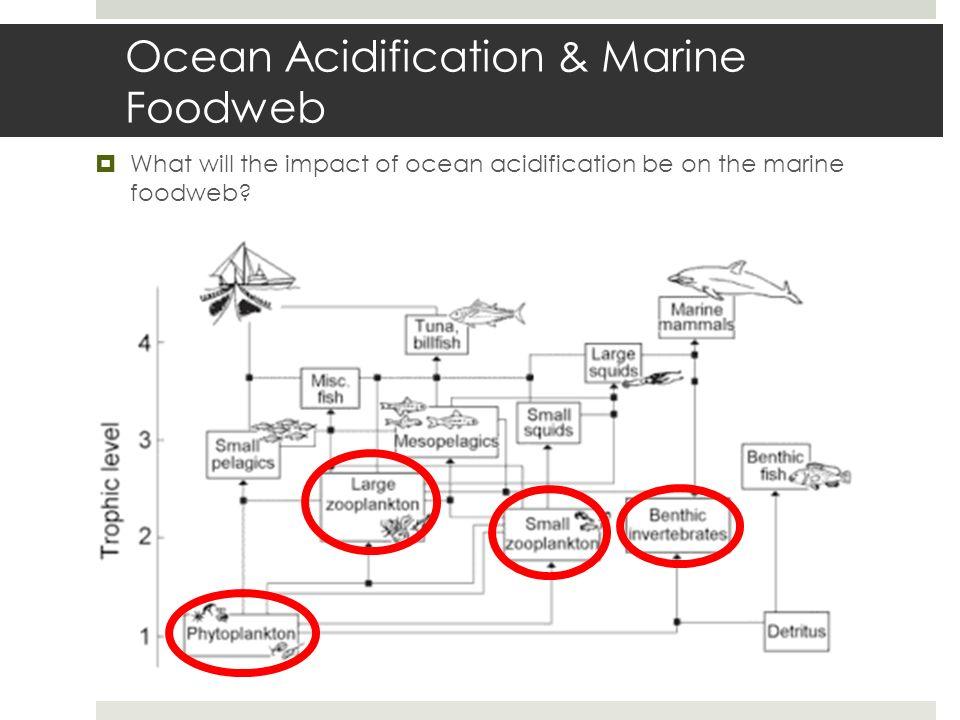 Ocean Acidification & Marine Foodweb