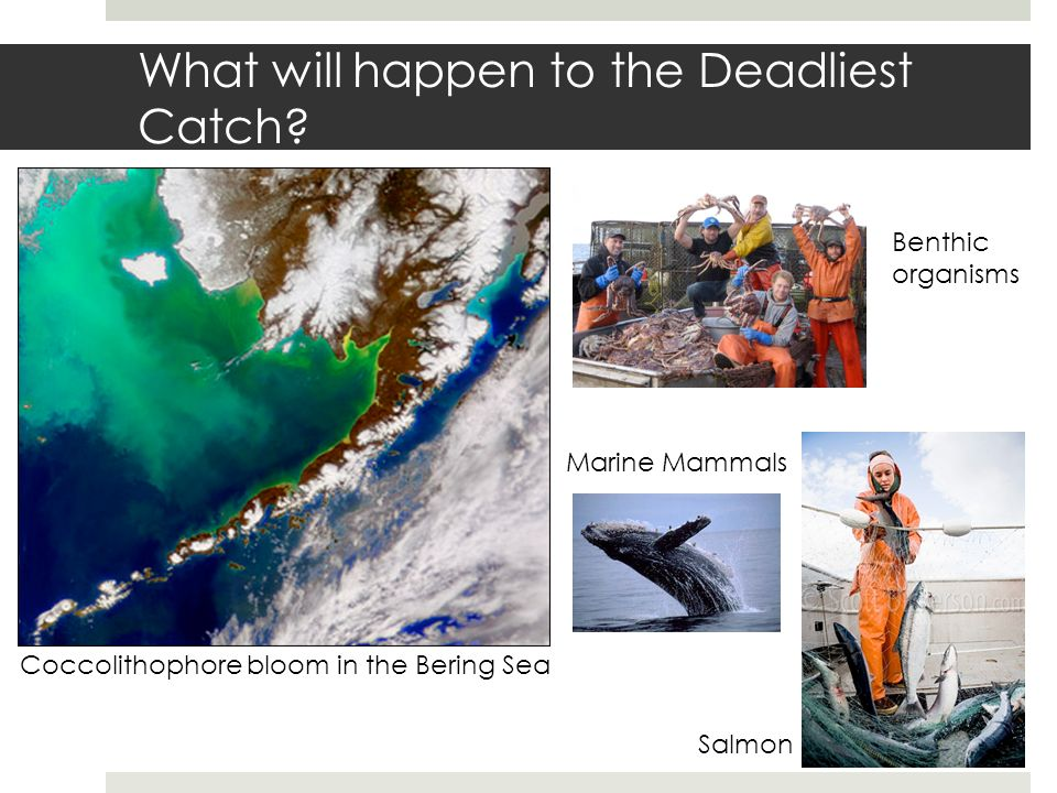What will happen to the Deadliest Catch