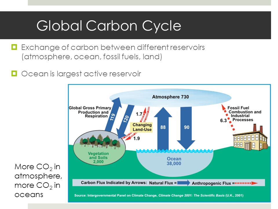 Global Carbon Cycle Exchange of carbon between different reservoirs (atmosphere, ocean, fossil fuels, land)