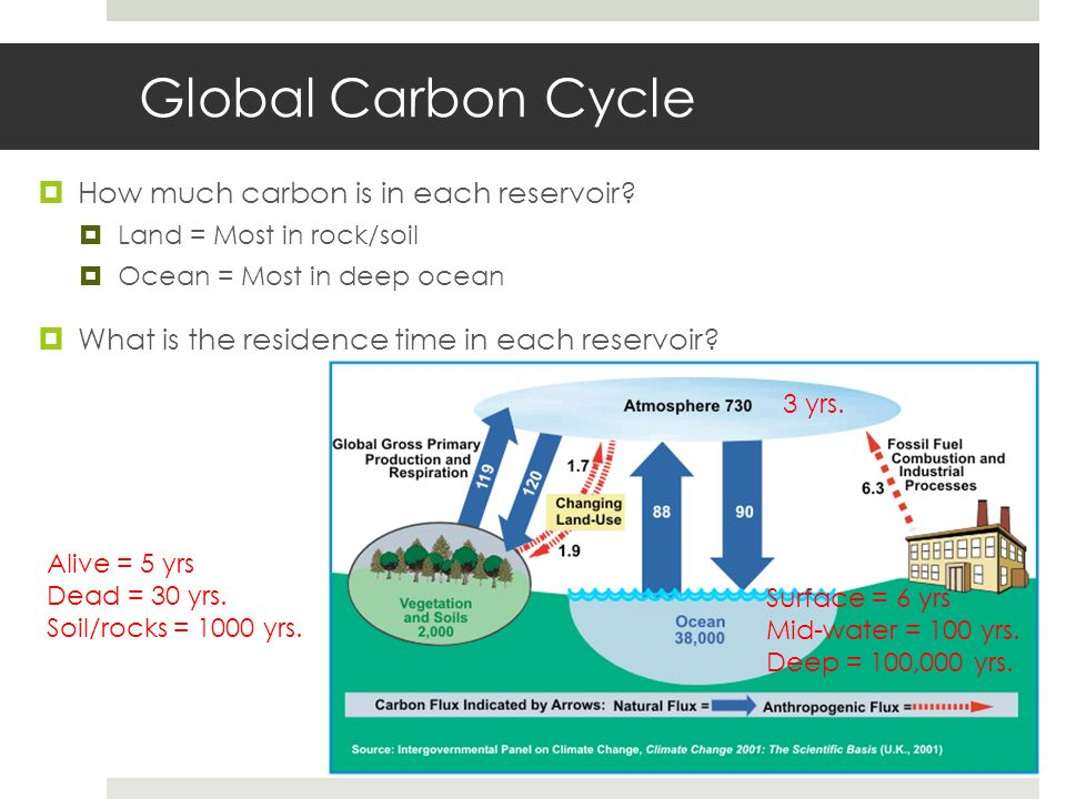Global Carbon Cycle How much carbon is in each reservoir
