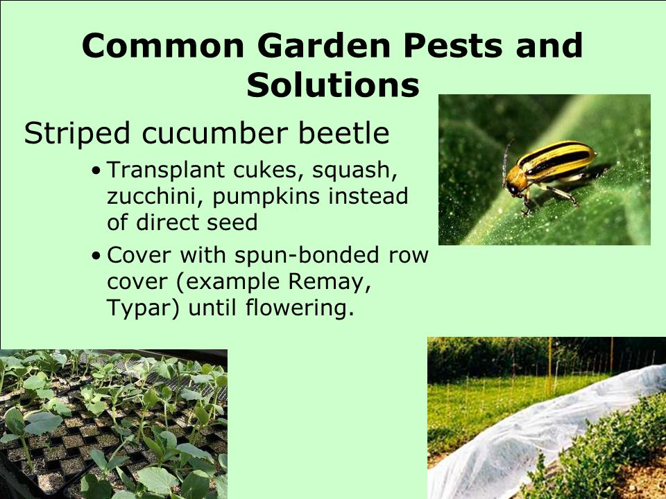 Common Garden Pests and Solutions