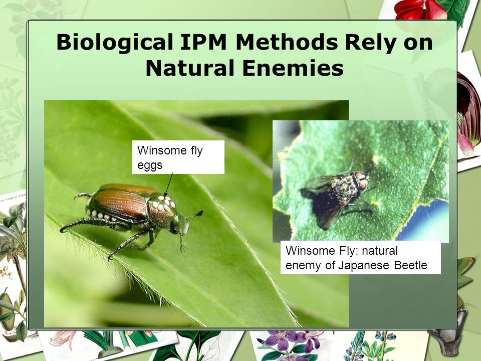 Biological IPM Methods Rely on Natural Enemies